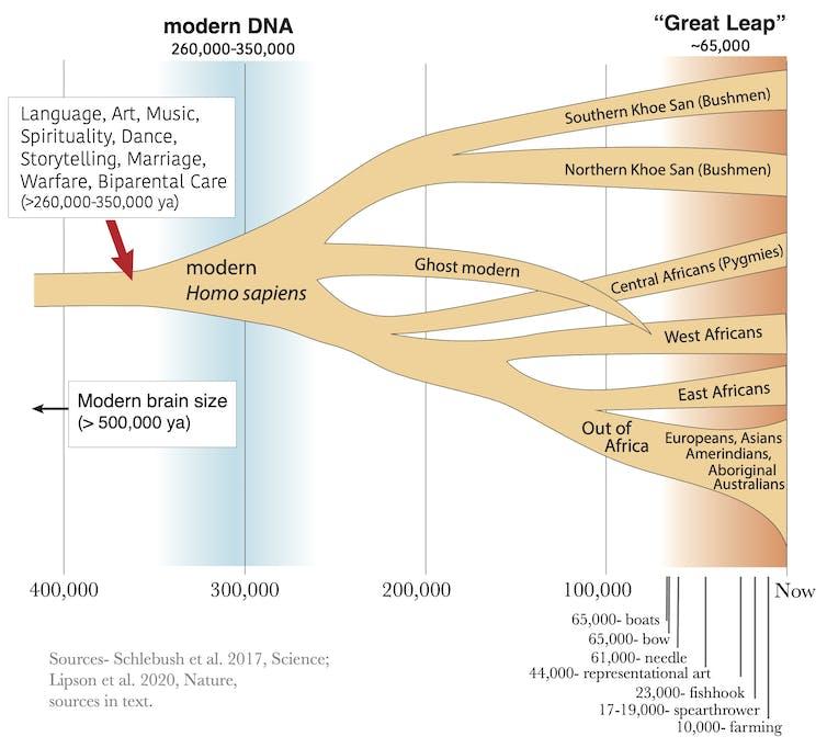 Diagrama de árbol que muestra la evolución humana.