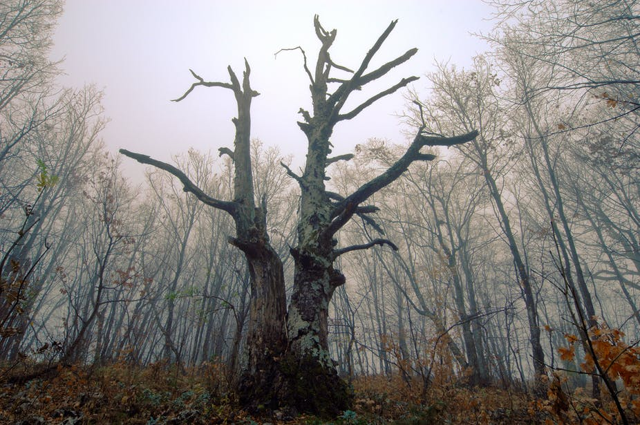 a dead tree in a forest
