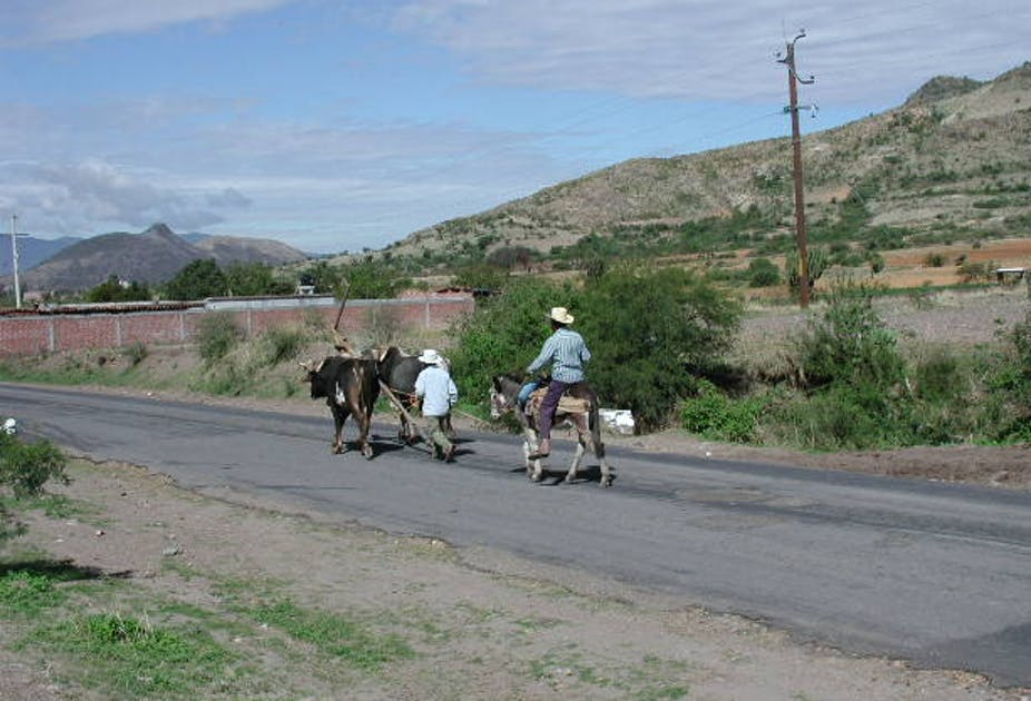 Men on horseback with oxen walk on a country road