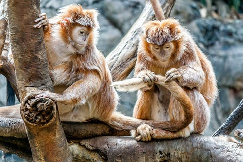 Two primates sitting in a tree.
