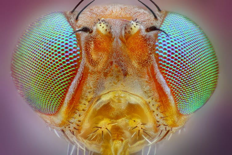 Close up of an insect's compound eyes