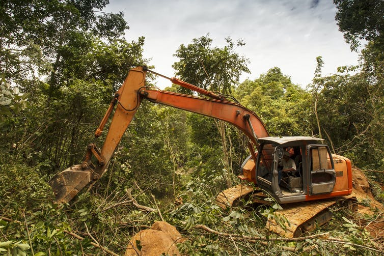 A digger tears down trees in a Malaysian rainforest.