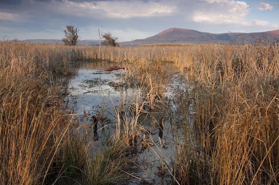 Landscape of a wetland reserve.