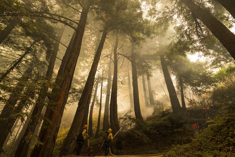 Firefighters work in a forest grove filled with haze.