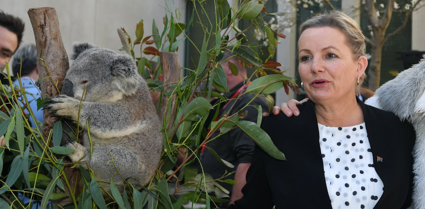 Environment Minister Sussan Ley faces a critical test: will she let a mine destroy koala breeding grounds?