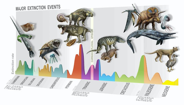 Timeline illustration of mass extinction events