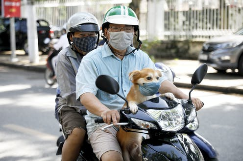Two people and a small dog all wear masks on a scooter.