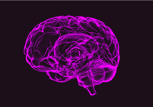 Outline of a human brain in bright pink against a black background