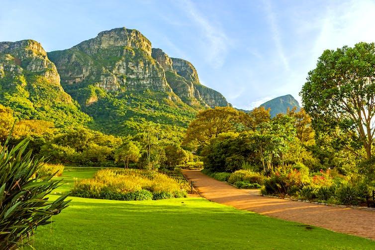 Lush green shot of the Kirstenbosch National Botanical Garden in Cape Town.