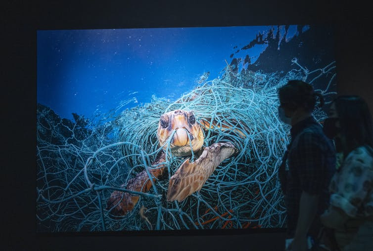 Museum visitors look at a large photograph of a turtle stuck in a fishing net.