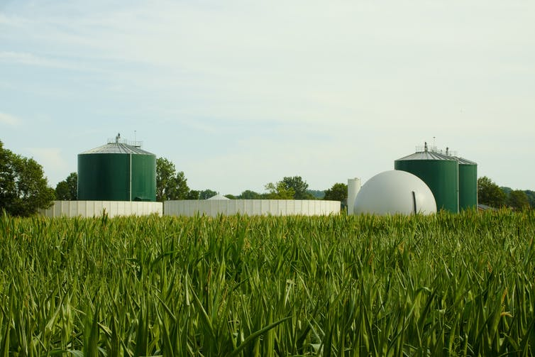 A bioenergy facility