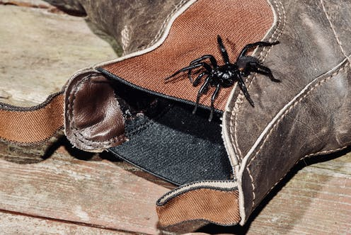 A funnel web on a boot