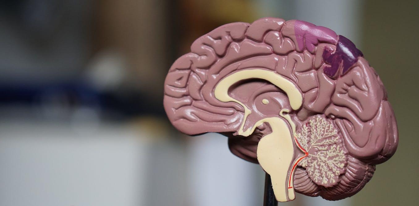 Qu'est-ce que la plasticité cérébrale ?