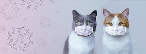 Dos gatos con mascarilla con un fondo dibujado de coronavirus.