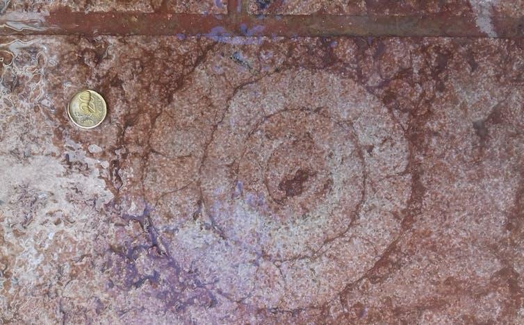 Fósil de ammonites en calizas rojas jurásicas, situado en la solería de una céntrica calle de Antequera. J.M. García Aguilar., Author provided