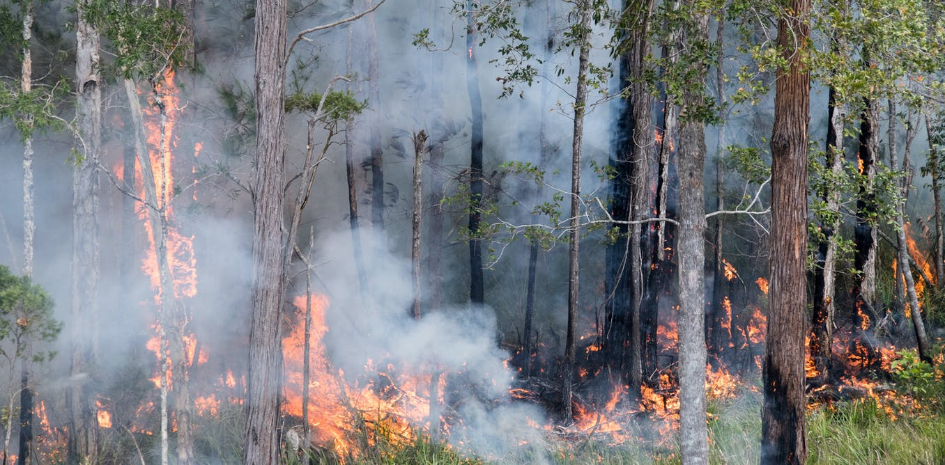 Our toxic legacy: bushfires release decades of pollutants absorbed by forests