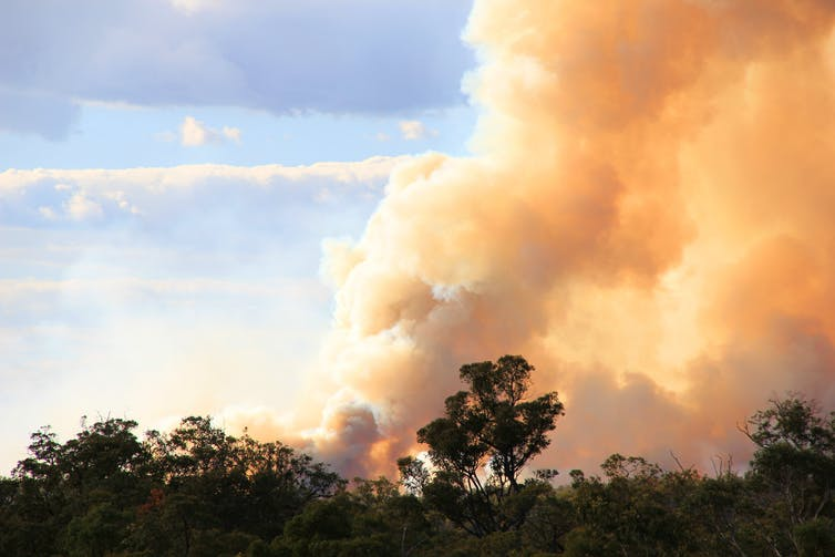 A huge plume of smoke coming from a forest