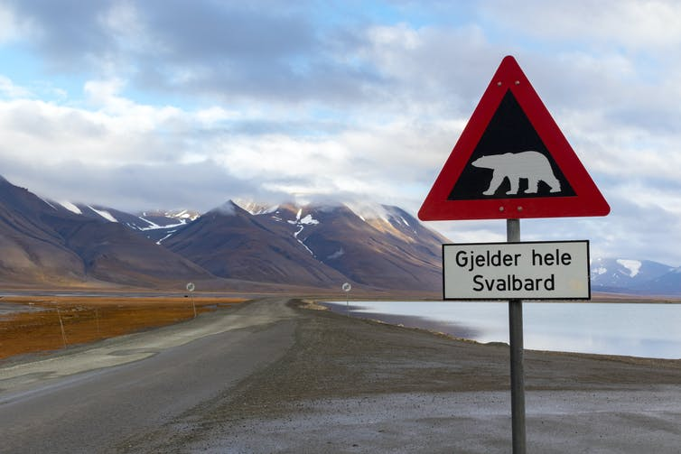 Polar bear warning sign, text beneath says
