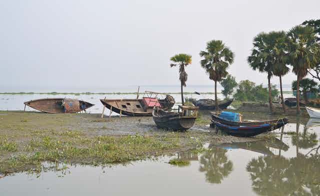 Five wooden boats lie on a mud bank surrounded by palm trees and water.