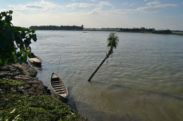 A wooden sailboat rests on a green bank next to a palm tree which has been overwhelmed by the rising water.