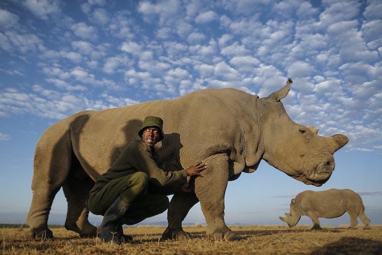 A caretaker crouches next to a rhino under a blue sky.