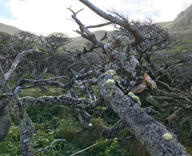 Gnarled, barren branches of a stunted tree.