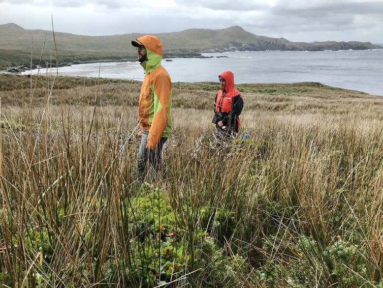 Two researchers stand behind a short, horizontally growing tree among grasses and backed by a large bay.