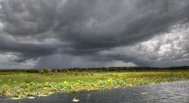Dark storm clouds brewing over wetlands