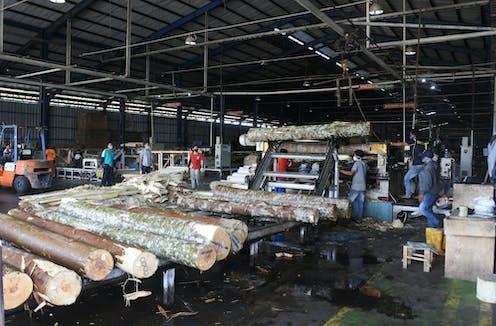 Belasan laki-laki berada di pabrik dengan gelondongan kayu