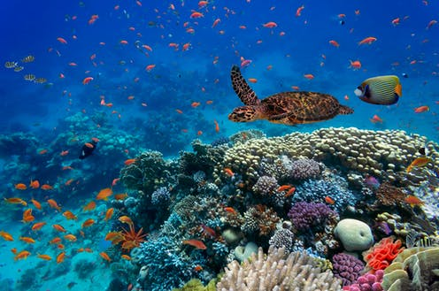 A sea turtle and tropical fish swim above a coral reef.
