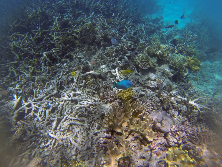 A bleached reef