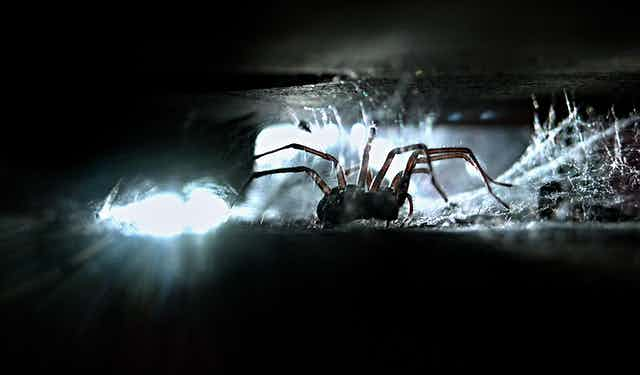 A house spider in a dark crevice with cobwebs, backlit by white light.