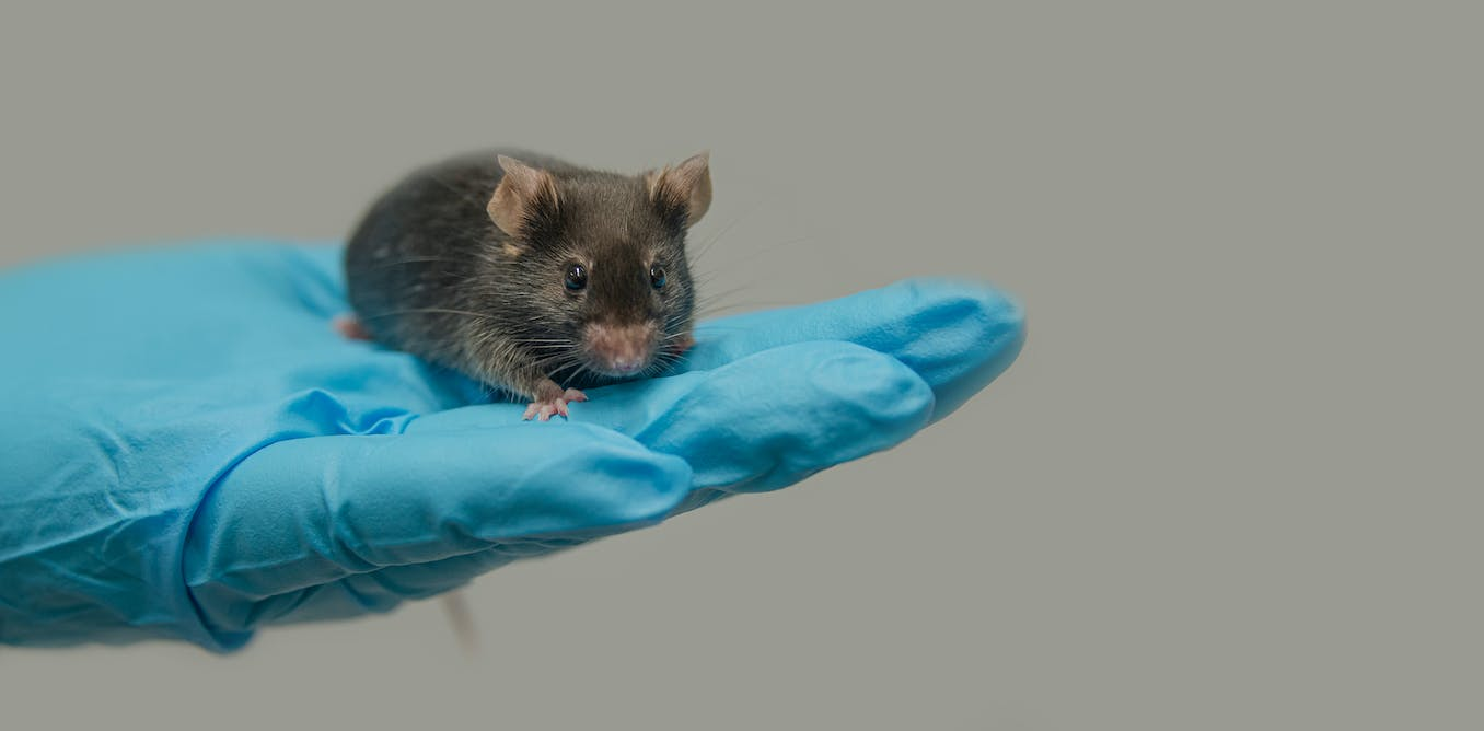 We discovered a missing gene fragment thats shedding new light on how males develop