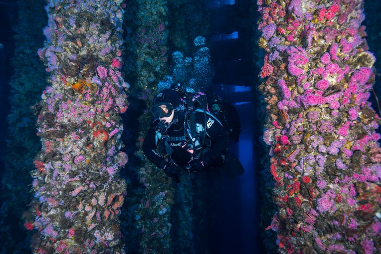Scuba diver swims between two columns covered in sea creatures.