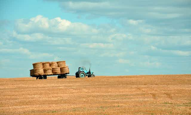 Tractor pulling haybales across a yellow field.