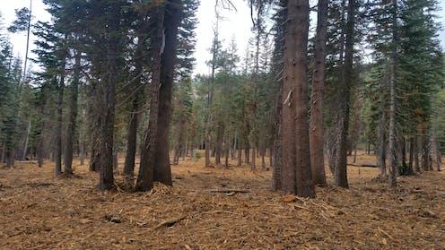 Forest after restoration
