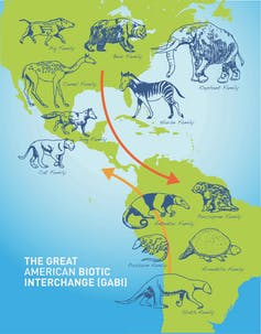 Map showing the Great American Biotic Interchange.