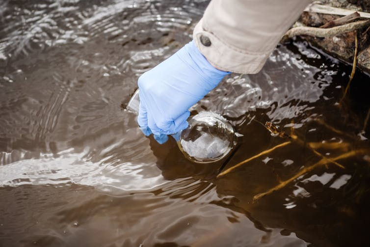 A gloved hand collects a river water sample.