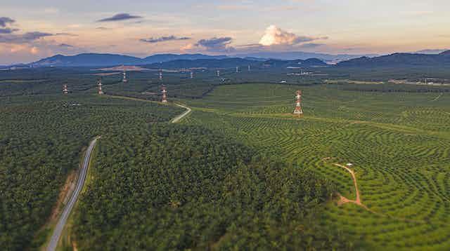 Perkebunan kelapa sawit dengan gunung sebagai latar belakang dan jalan.