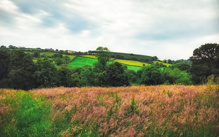 Rolling fields.