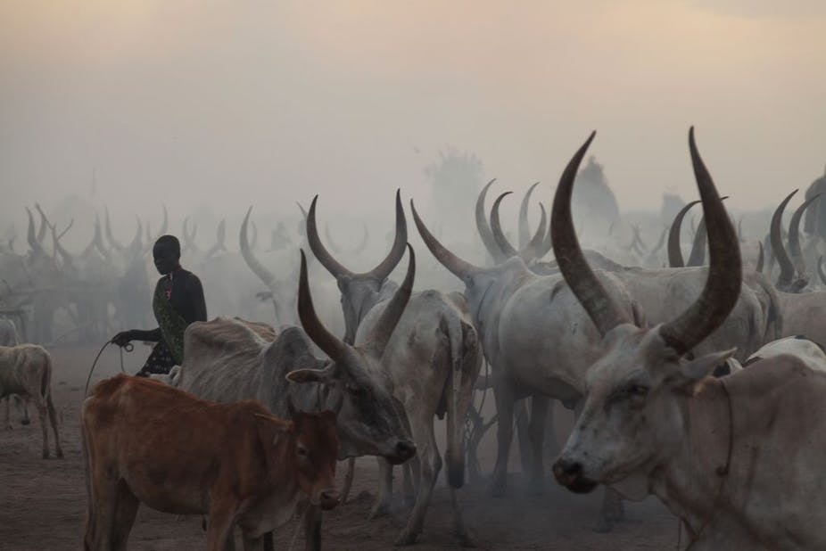 Cattle with long horns stand in hazy light, a woman carrying a bucket moving between them.