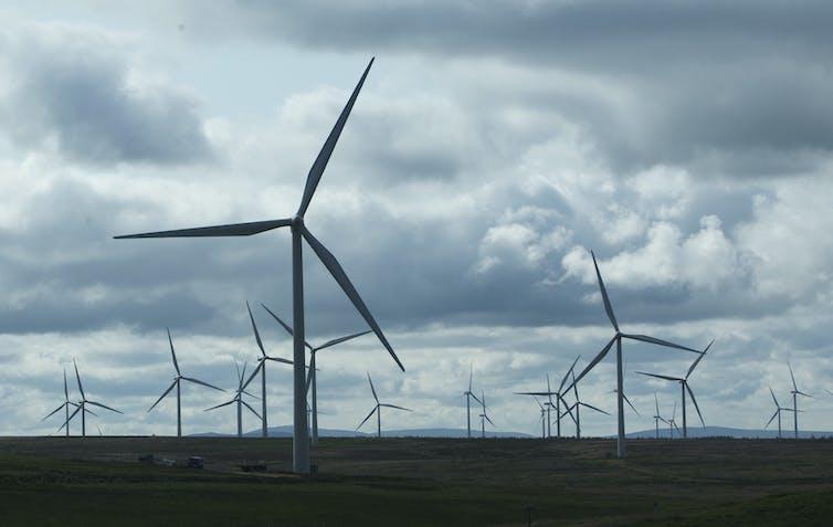 A field full of wind turbines.