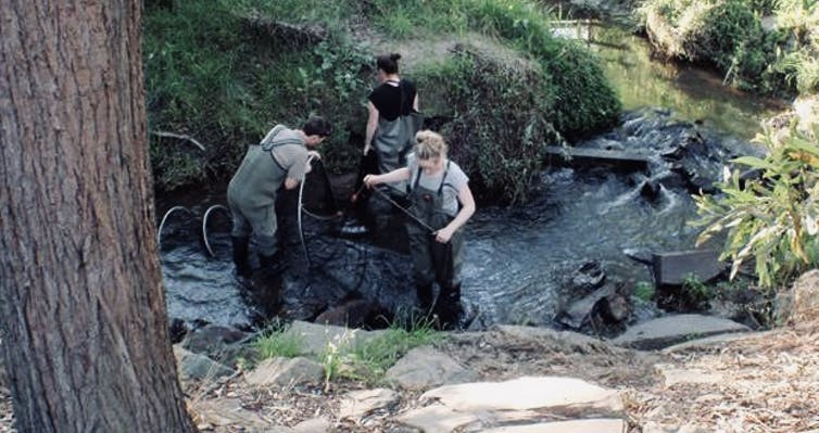 Scientists working in a creek