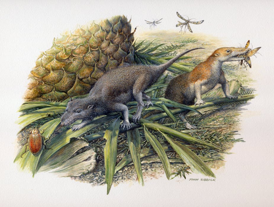Illustration of small rodent-like mammals catching insects.