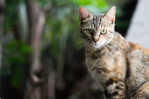 A cat outdoors.
