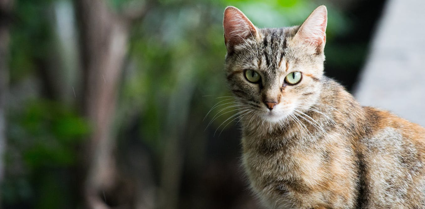 Cats carry diseases that can be deadly to humans, and its costing Australia $6 billion every year