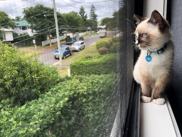 Un chat est assis sur le rebord de la fenêtre, donnant sur la rue.