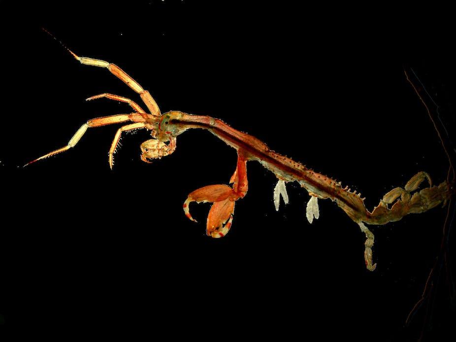 Caprella mutica There are no barriers to prevent marine invasive species