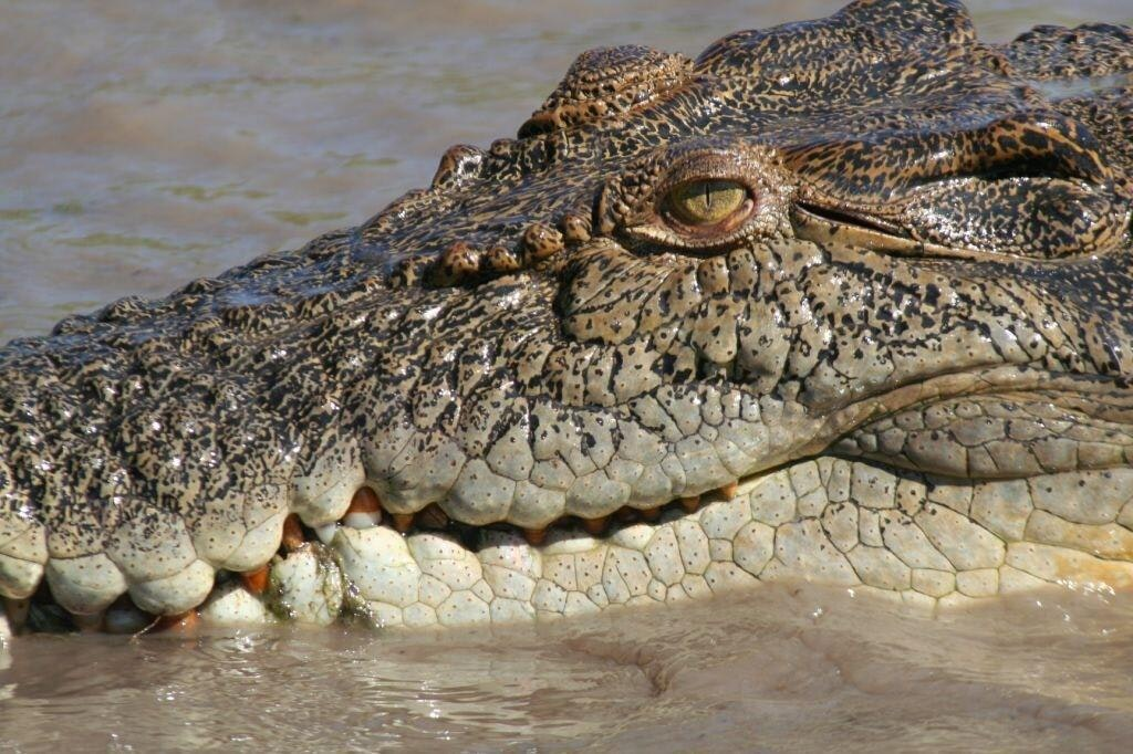 Forum on this topic: A new type of crocodile was just , a-new-type-of-crocodile-was-just/