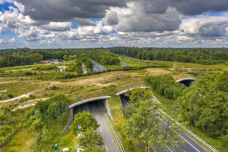 An overpass of vegetation.